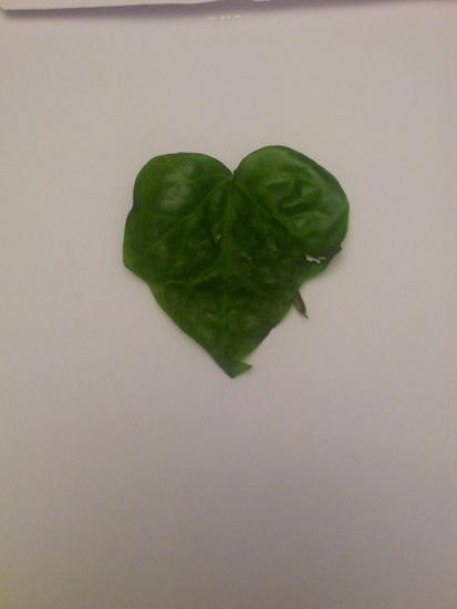 una foglia di spinaci a forma di cuore perfetto