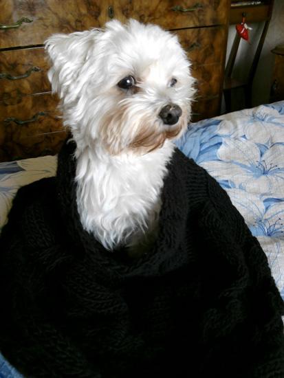 MY DOG WINNY