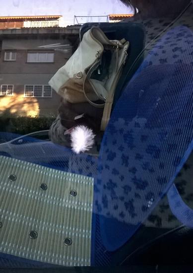 piuma sul finestrino della macchina