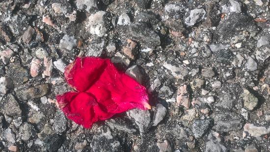 immagine di un petalo rosso a forma di cuore